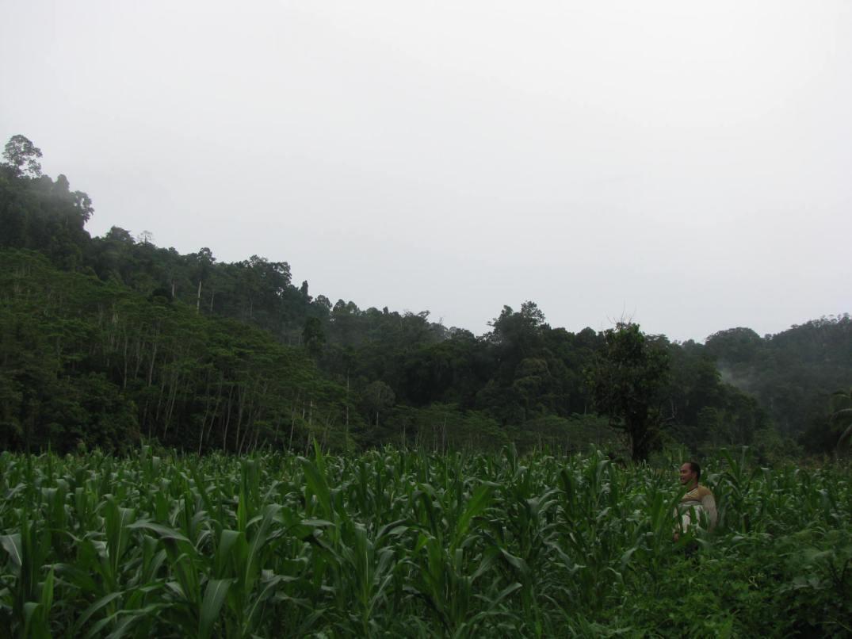 Community farm - Lianga caraga1